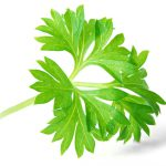 Parsley image
