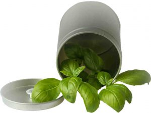 A simple drink using holy basil can help reduce stress
