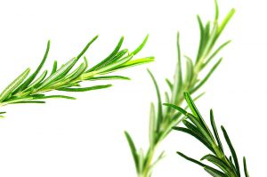 Rosemary helps digestion which is essential for weight loss.