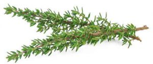 Thyme has diuretic properties, which helps to detoxify the body.