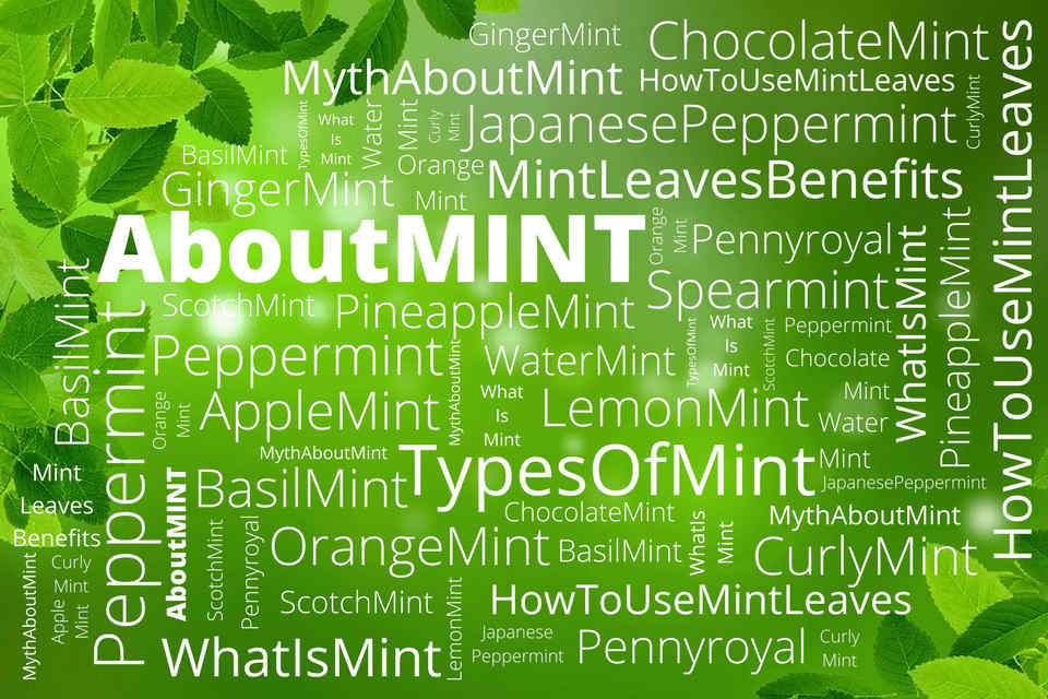 There are many interest ways on how to use mint leaves. Knowing the mint leave benefits, you will want to know more about mint leaves