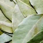 Bay leaf is strongly aromatic with a woody, sharp flavour and a pleasant, slightly minty aroma