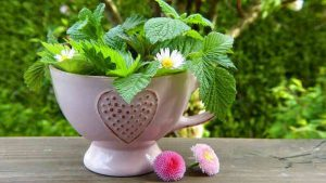 Beautiful Pot of Mint