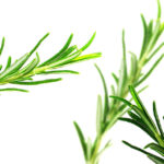 Rosemary has a minty, peppery, balsamic taste with a bitter, woody aftertaste.