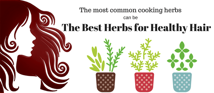 Common Cooking Herbs can be the Best Herbs for Healthy Hair