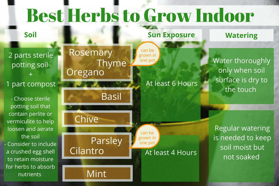 Best Herbs to Grow Indoor