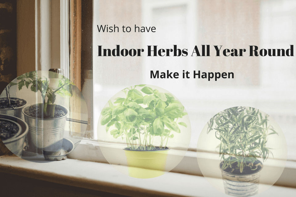 Fresh herbs at your fingertips year round and no worries when the seasons change.
