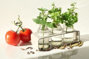 Herbs that can propagate well from cuttings are rosemary, thyme, oregano, basil and mint.