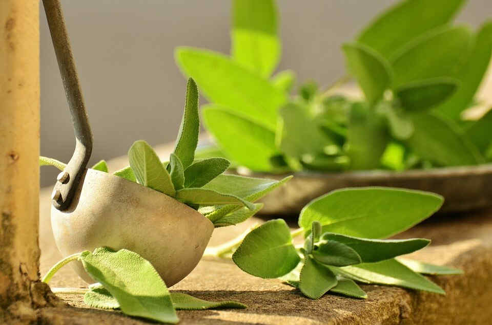 Sage's antioxidant and anti-inflammatory properties are beneficial to neurons and other brain cells.