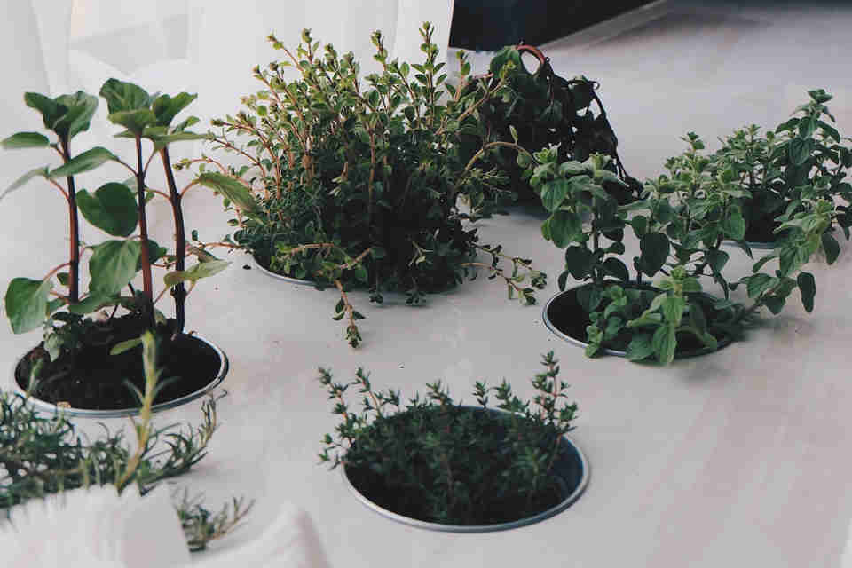 Growing herbs indoors year round will ensure that you have them at your fingertips as and when needed