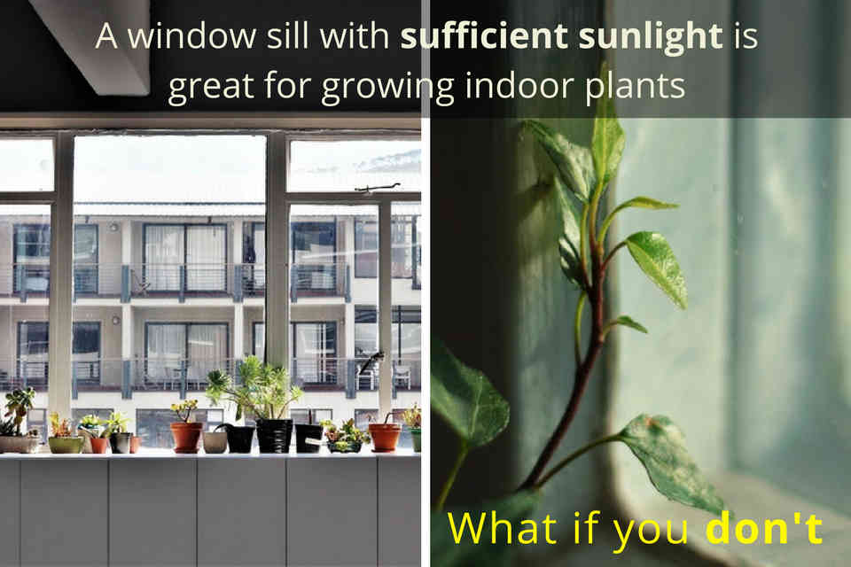 Use grow lights if there is insufficient natural light at window sill