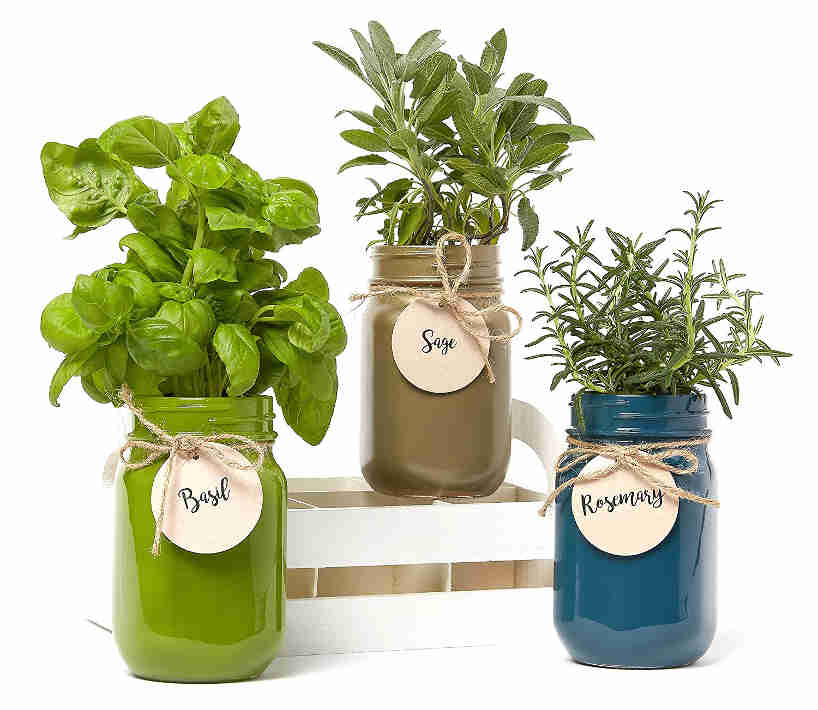 Grow your herbs outside the pot using these beautiful mason jar