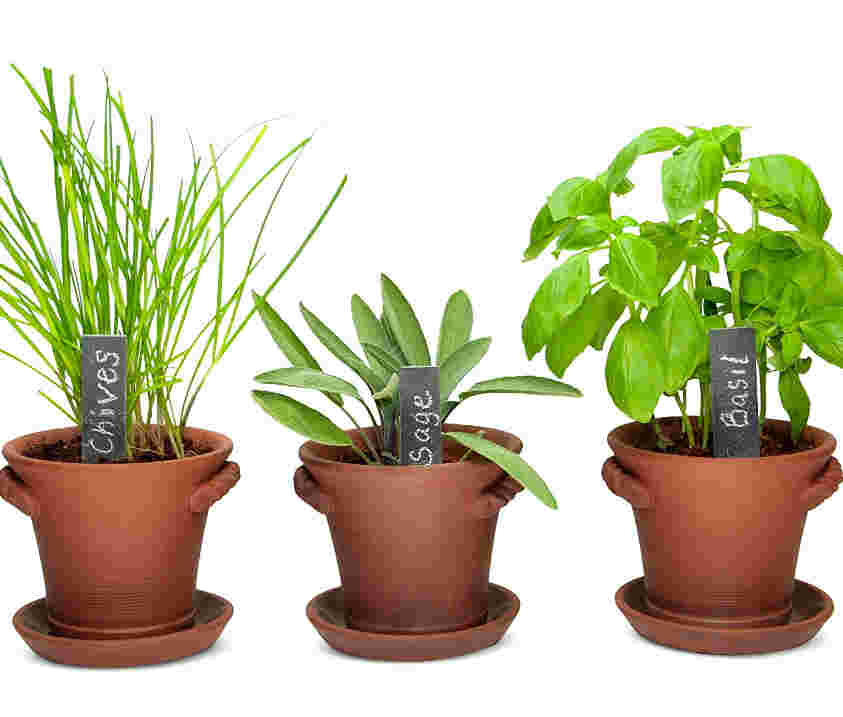 Indoor herb garden for beginners