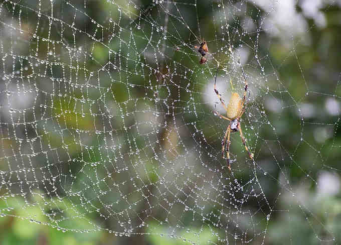 Spider builds webs to catch its prey
