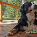 Can Dogs Eat Herbs