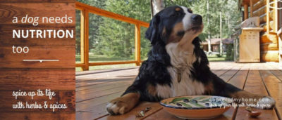 Should you have more herbs than you need for cooking, share with your dog. But NOT all herbs are good. Find out more..