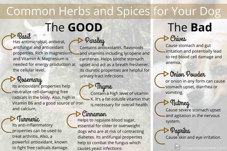 The good and bad herbs and spices for your dog that you should know