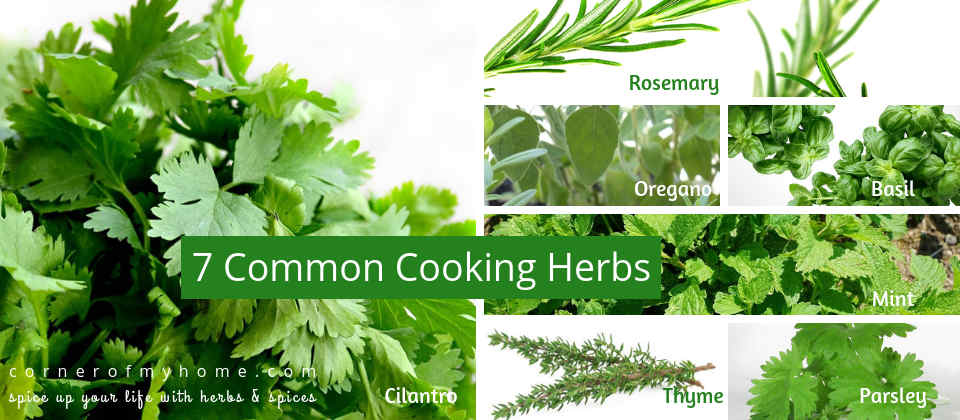 7 Common Cooking Herbs