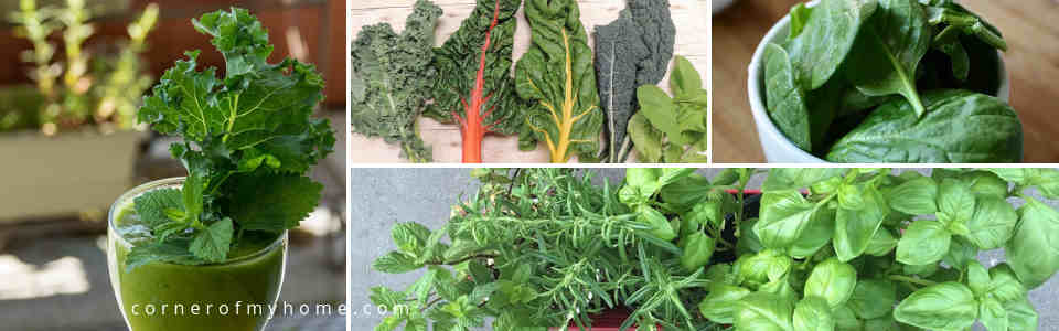 Leafy greens and herbs for juicing