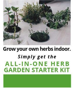 Grow you own herbs indoor year round