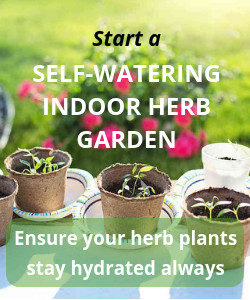 Ensure your herb plants stay hydrated always