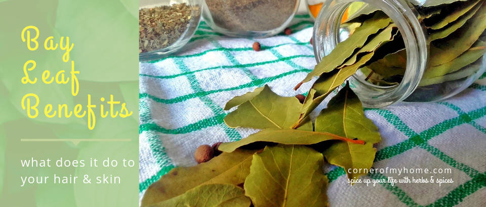 Its vitamins and minerals content, together with antioxidant and antimicrobial activities mark bay leaf ideal for skin and hair care.