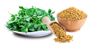 Fenugreek seeds is an ancient spices with a long history of use in food and as medicines.