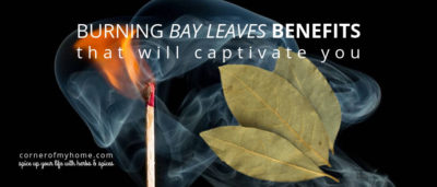 Health benefits or magical uses, will you burn the bay leaves?