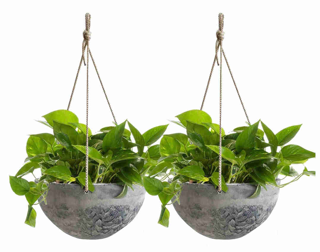 La Julie Muse Concrete Pattern Hanging Planter