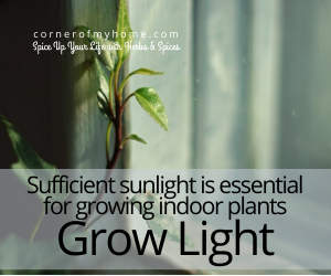 Sufficient sunlight is essential for growing indoor plants. Use a grow light.