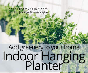 Add greenery to your home with a beautiful indoor hanging planter.