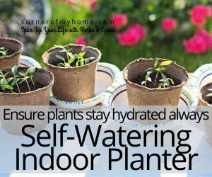 Ensure plants stay hydrated always using a self watering indoor planter.