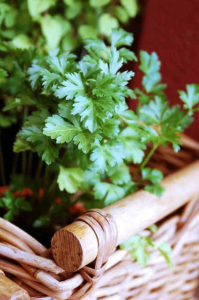 Parsley is rich in antioxidant and important nutrients that are Vitamin K, A and C.