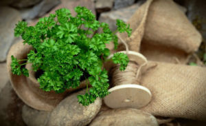 Grown as an annual herb, parsley is one of those herbs that can put up with almost any condition